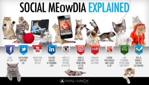 social-media-explained-by-cute-cats